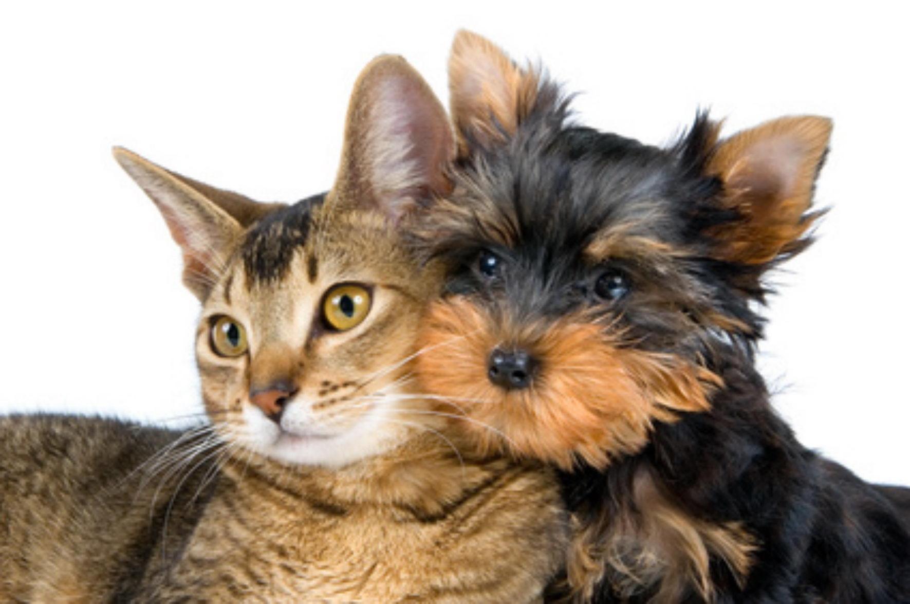 Alergie na zvířata: co si počít?