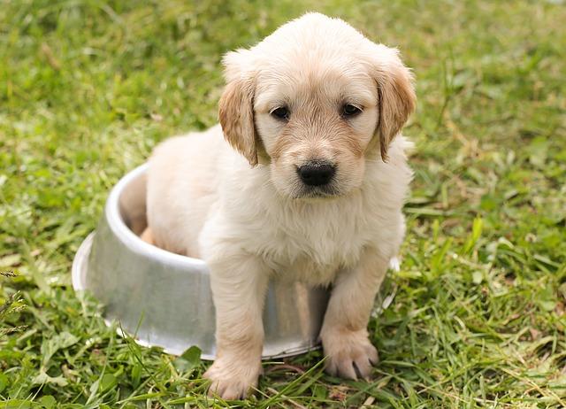Zvládne být štěně doma samo?