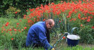 6 nejlepších jednoduchých zahradnických triků