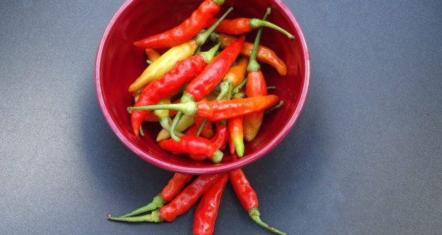 Jak pěstovat doma chilli papričky po celý rok