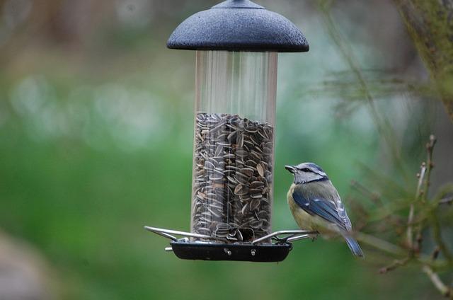 Zpříjemněte ptáčkům zimu!