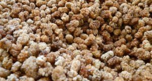 Zdravotní výhody moruše bílé aneb Jsou nějaké?