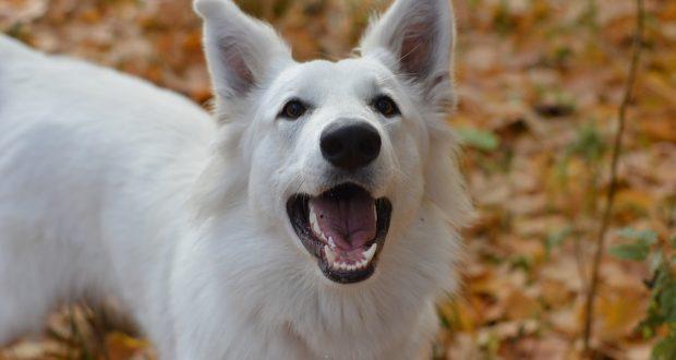 Pořizujete si psa? Co patří do základní výbavy?