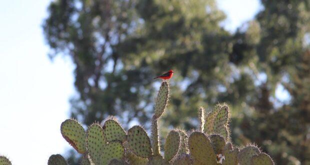 Nopal - rostlina, která vás překvapí svými zdravotními potenciály